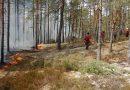 Länsstyrelsen naturvårdsbränner i Kolmården